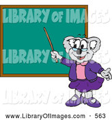 Clip Art of a Friendly Koala School Teacher Pointing to a Blank Chalk Board by Dennis Holmes Designs
